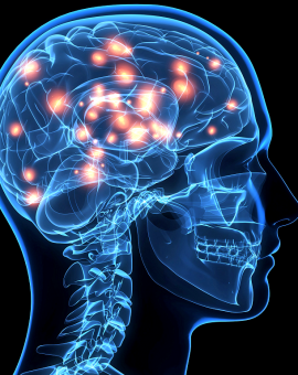 Trí nhớ - tuần hoàn não