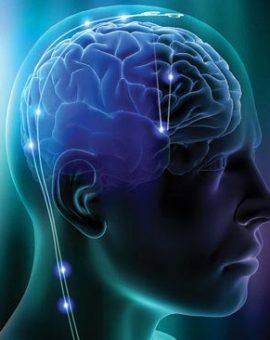 Thần kinh , tinh thần , trí não